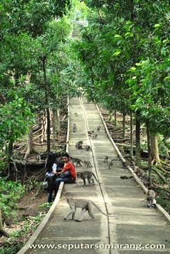 monyet di antara pengunjung