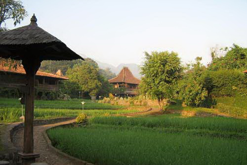 Rumah Joglo Jawa di tengah persawahan