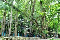 Rindang pepohonan taman lele