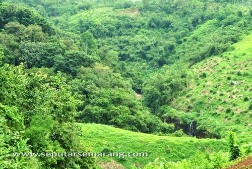 Hijau pepohonan sungai kreo