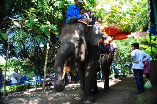 Naik Gajah di Bonbin