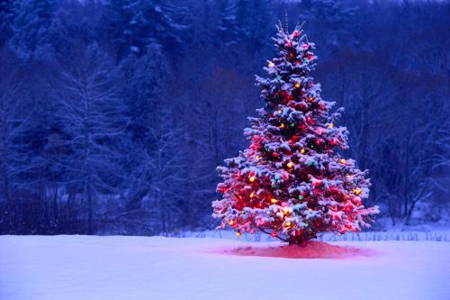 Pohon Natan di Salju
